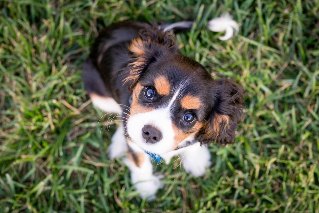 puppy insurance UK