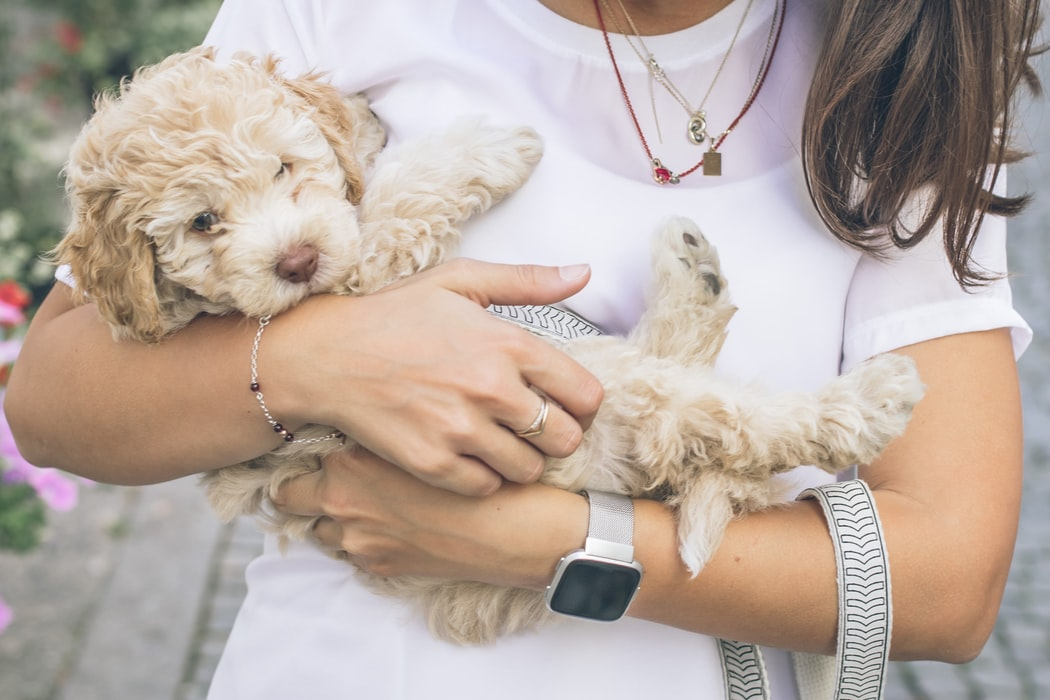 cockapoo pet insurance