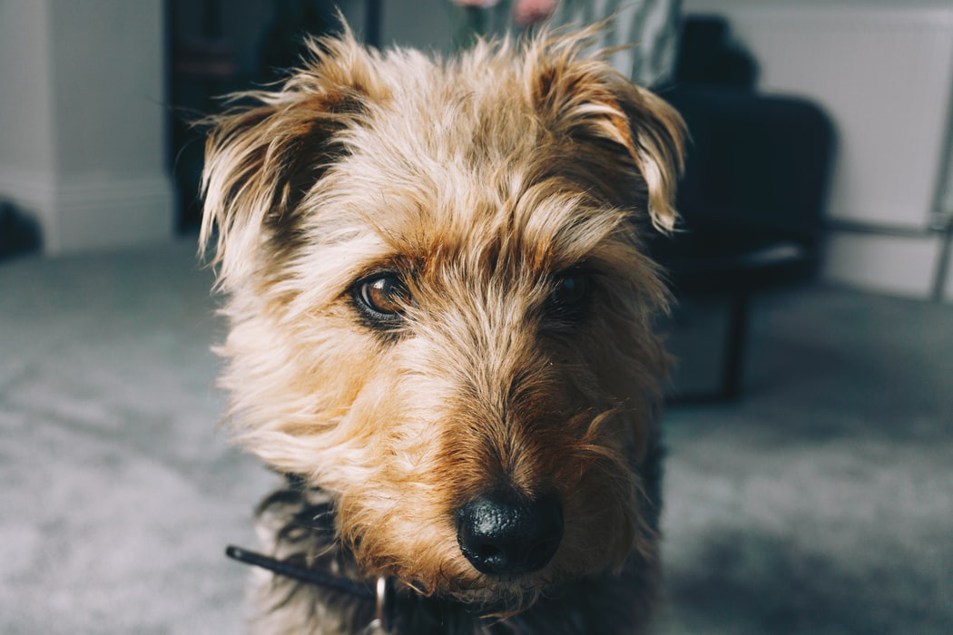 Pet Insurance For Rescue Dogs